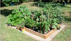 Photo of Backyard Raised Bed Garden in Edgewater, FL