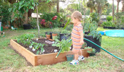 Photo of Raised Bed Garden and Helper...