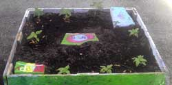 Photo of Vegetables being grown in a Raised Bed Garden.